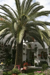 Courtyard with palm tree: Traditional decorated inner courtyard of a house in southern Spain.