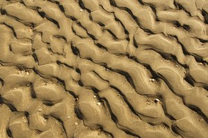 Sand: A field of underwater sand waves