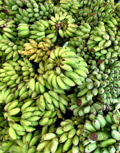 banana abundance1: multiple bunches of green bananas