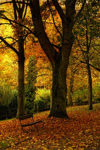 Bright colored autumn trees