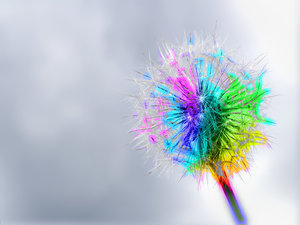 Rainbow Dandelion: A dandelion edited with rainbow colours. You may prefer:  http://www.rgbstock.com/photo/2dyVV1T/Rainbow+Gardenia