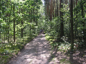 A walk through the forest: A path in the forest.