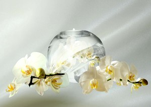 Orchids  with candle