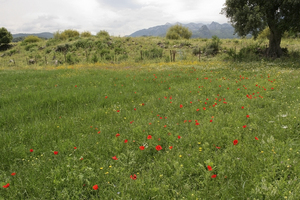 Spanish flower meadow: A meadow of wild flowers in southern Spain.