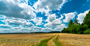 Fields and Blue Sky: Blue Sky with white Clouds above Grain FieldsBavaria near Munich, germany