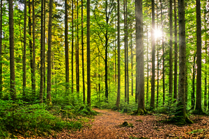 Natural Forest - Sunburst: Farytale Scene - Sunburst in natural Forest