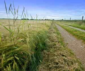 Field Path: Field Path - Dirt Road through agricultural Landscape