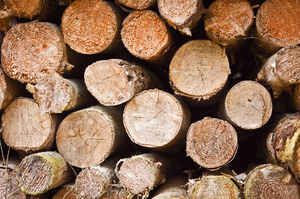 Firewood Stocks: Stack of old Firewood