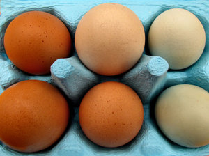 egg pack4: egg variety in colourful blue egg carton - 6 pack