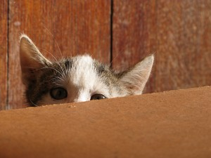 Free stock photos - Rgbstock -Free stock images | shy ...Scared Kitten Hiding
