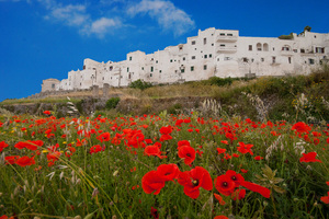 Beautiful city in Puglia Italy: Lot's of beautiful poppies in the surroundings of an Italian city