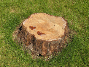 Stump: Just a tree stump.