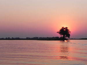 sunset on the river: river Chobe, Botswana