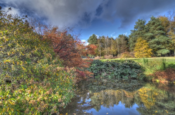 Autumn scene 2: An arboretum in Kent. This is an HDR image.