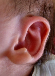lend me your ear: close-up of newborn baby's ear