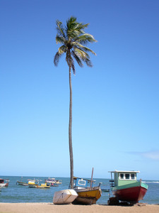 Coconut tree and boats