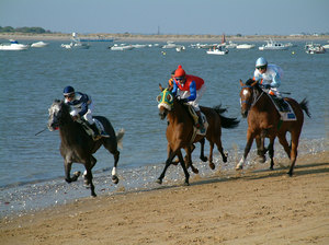 Horses racing in the beach