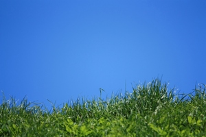Grass against blue sky