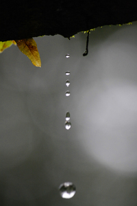 Drops: Nature Click