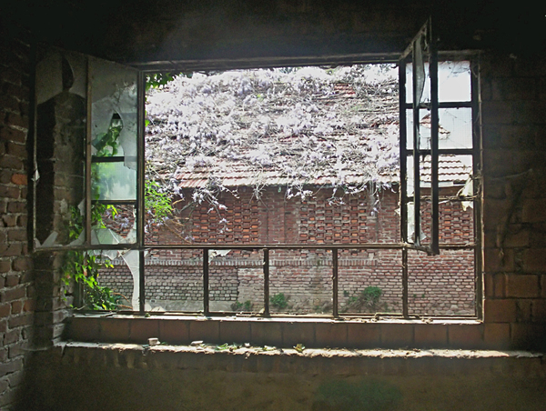 window with view of a ruined r: window of an abandoned builing with a view of a roof covered by vegetation