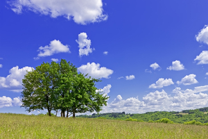 Lonely tree in French field: Picture was taken during summer near Le Pagnon, France.