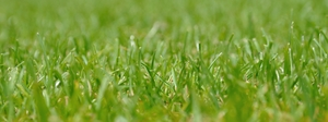 Grass 2: close up from grass