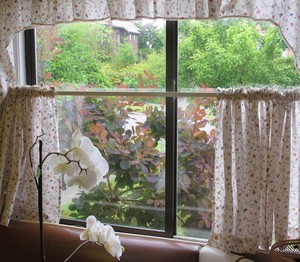 Orchids and kitchen window: Peaceful green and gold foliage outside a curtained kitchen window, with white orchid plant inside.