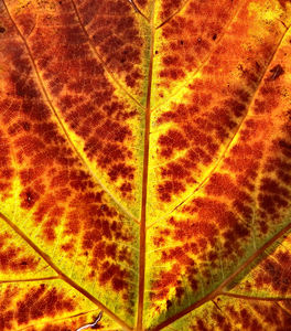 autumn leaf light2