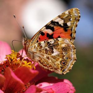my garden butterfly: none