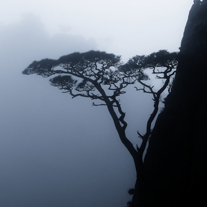 Pinetree on the cliff: The shot was taken in Huangshan mountains, China, the day was misty and rainy.The file is ready to be printed on paper at 300 dpi resolution.Remember, ANY comments make me feel better! :))