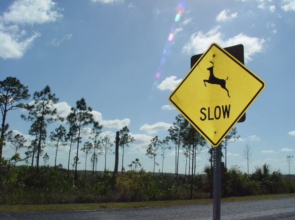 deer crossing 2