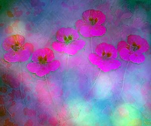 Nasturtium Abstract 8: A grungy abstract, arty image of pink nasturtiums  against a colourful blurred  background. You may prefer:  http://www.rgbstock.com/photo/n6cBw84/Nasturtium+Abstract+5  or:  http://www.rgbstock.com/photo/n49wWG4/Nasturtium+Abstract+1