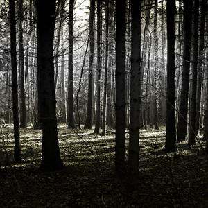 dark forest: i capture this photo at a walk