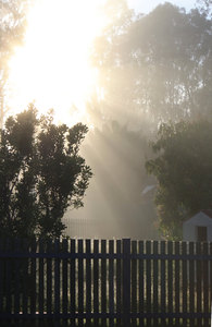 Misty Morning: Sunrise through the mist on a cold morning, with dew on the plants.