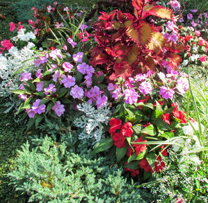 colourful plants assortment 2