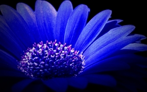 Blue Beauty: no description