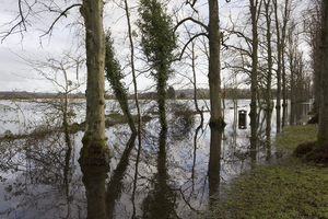 Winter floods: Flooded fields and a tree-side walk in Arundel, West Sussex, England.