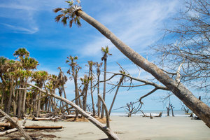 South Carolina Tropical Beach: Yes this is the South Carolina that most residents of the state have no idea exists. Just sixteen miles outside Charleston. Not a soul, I saw no one all day. Shot on a hot August day in the mid afternoon on Bull Island