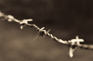 Barb wire closeup