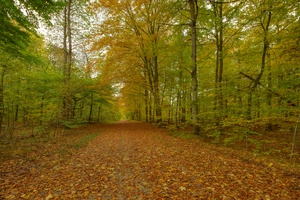 Autumn forest - HDR