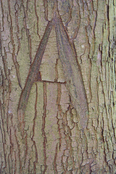 Letter on tree bark