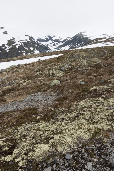 High altitude habitat: Landscape of a high plateau in Norway, with melting snow revealing low-growing plants, principally lichens.