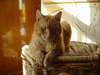 Cat: Red House Cat