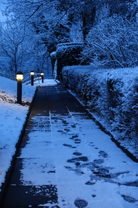 snowy footpath in morning ligh: snowy footpath in morning light