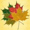 Fall Colours 1: Variations on fall colours.