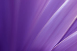 Purple Blur: An abstract color background.