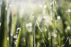 Morning dew: A fresh new start of the day, nature at it's best
