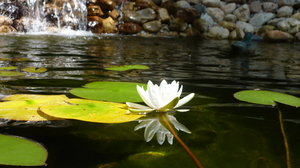 Around the Pond: These are photos taken around our backyard pond.  They turned out so great, I had to share!