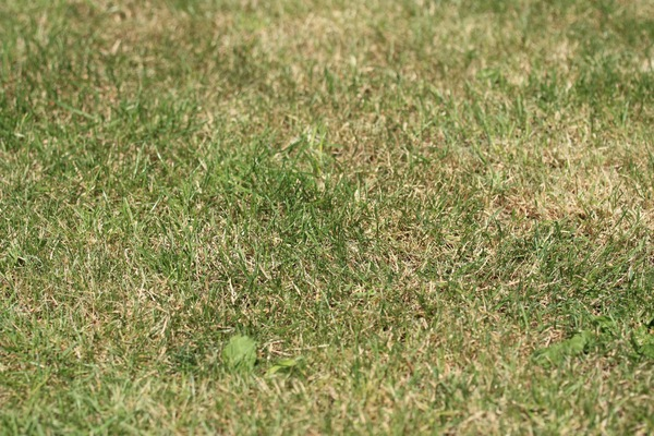 Free stock photos - Rgbstock - Free stock images | Dry grass