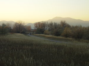 November Evening: Well, maybe I was sent to the park to walk/brush the dog, but... luckily she didn't mind I was preoccupied with taking photos. That mountain there appears in so many of my photos. It's Mt. Morison, 7550 ft. I love its sharp, rugged quality and especially